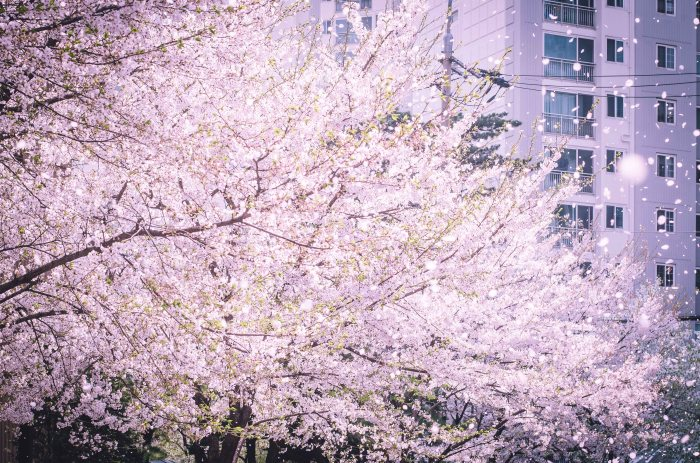 2015DSC_4162